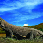 komodo_national_park